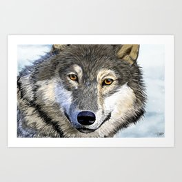 Eyes of the Wolf Art Print