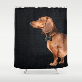 Elegant dachshund. Shower Curtain