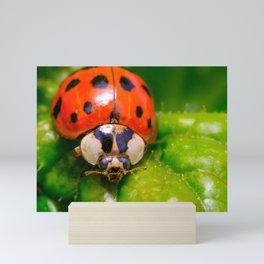 Lil' Ladybug Macro Photography  Mini Art Print