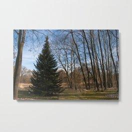 Beautiful Conifer Tree Forest Landscape Metal Print