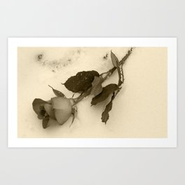 A lone rose resting in the snow Art Print