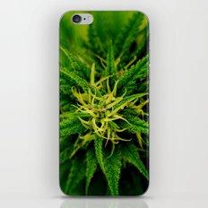 Marijuana iPhone & iPod Skin