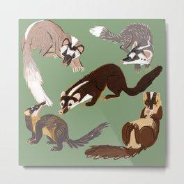Ferret Badger Species Metal Print