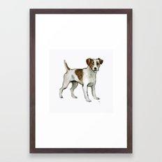 Jack Russell Terrier Framed Art Print