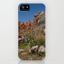 Desert Wildflowers & Cacti in Spring iPhone Case