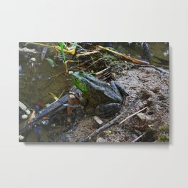 Froggin' It Metal Print