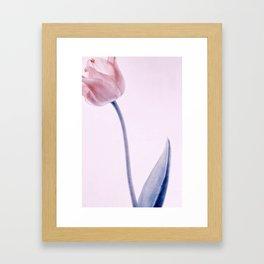 tulip series Framed Art Print