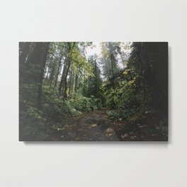 Rainy Forest Metal Print