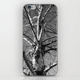 Simple Birch iPhone Skin