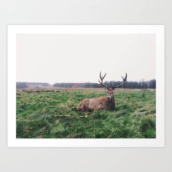 Deer #landscape Art Print