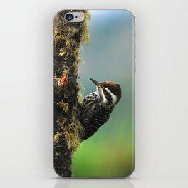 Striped woodpecker looking for breakfast iPhone Skin