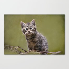 Scottish Wildcat Kitten Canvas Print