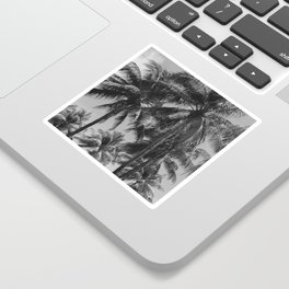Palm Trees Black and White Photography Sticker