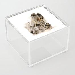 Hare Acrylic Box