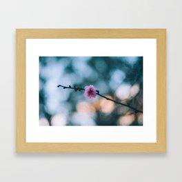 Lonely Blossom  Framed Art Print