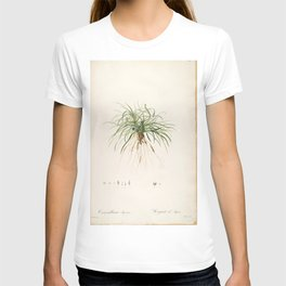 convallaria japonica Redoute Roses 1 T-shirt