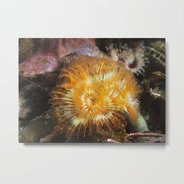 Orange Serpulid Worm Metal Print