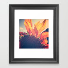 Sunflower 1 Framed Art Print
