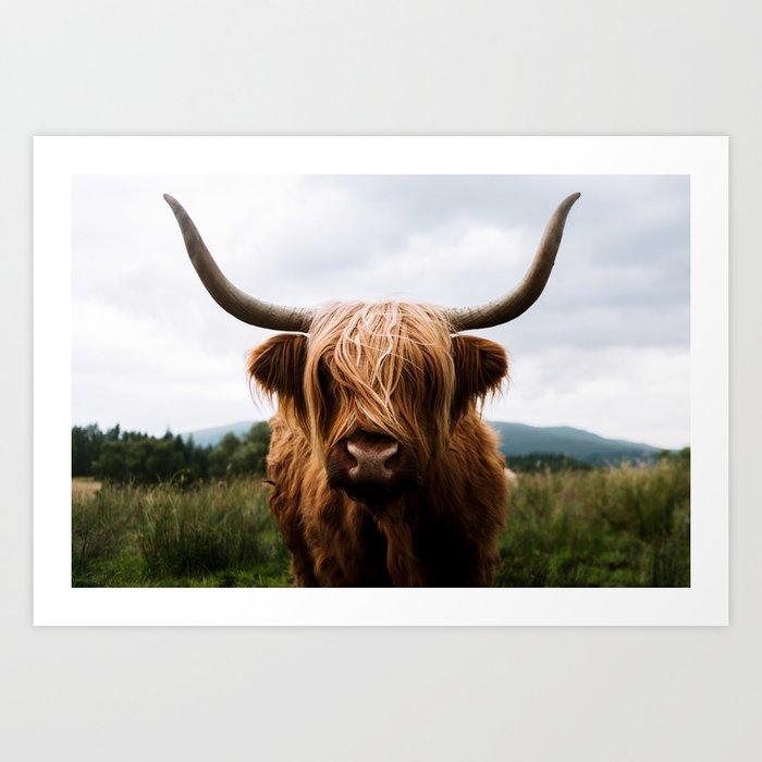 Scottish Highland Cattle In Scotland Portrait Ii Art Print By Regnumsaturni