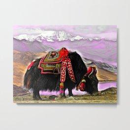 Tibetan Yak Metal Print