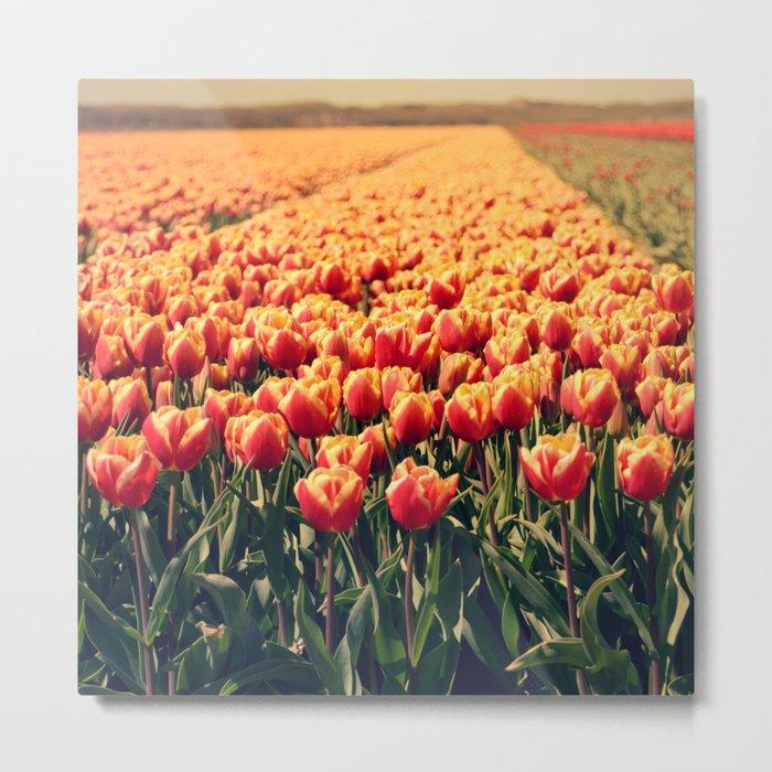 Tulips field #6 Metal Print