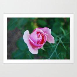 Rose fainting Art Print