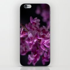Red Bud Blossoms  iPhone & iPod Skin