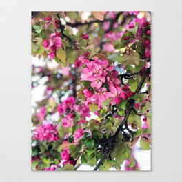Pink tree flowers Canvas Print