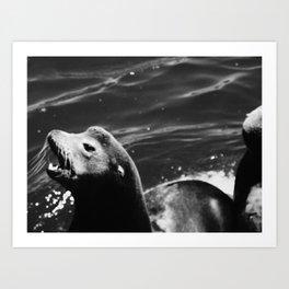 seal Art Print