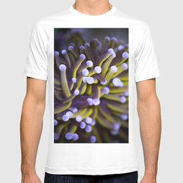 Coral Euphylia Golden Torch T-shirt