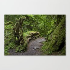 forest growth Canvas Print