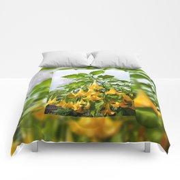 Big yellow Brugmansia called Angels Trumpets Comforters