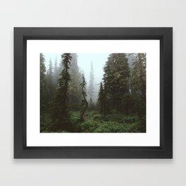 Rainier Forest Framed Art Print