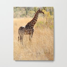 African Giraffe on a Bright Day Metal Print