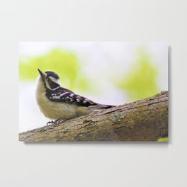 This Bird is TOO Sweet! by Reay of Light Photography Metal Print