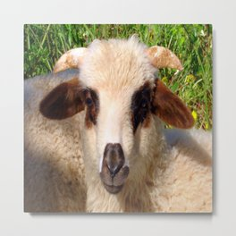 Sheep Portrait Close Up Metal Print