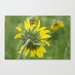Ladybug climbing wildflower Canvas Print