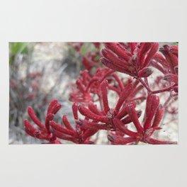 Red Kangaroo Paw Rug