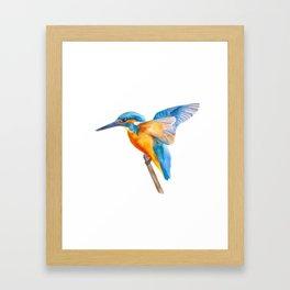 Original Kingfisher Framed Art Print