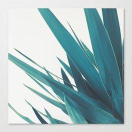 Yucca Leaves II Canvas Print