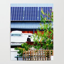 Cat on a Hot Solar Roof Poster