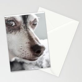 Chillhuahua Stationery Cards