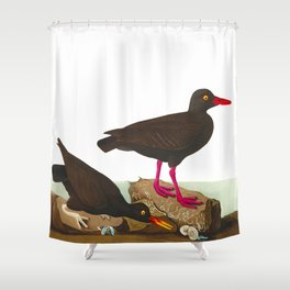 White-legged Oyster-catcher, or Slender-billed Oyster-catcher Bird Shower Curtain