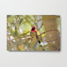 Hummingbird Beauty Metal Print