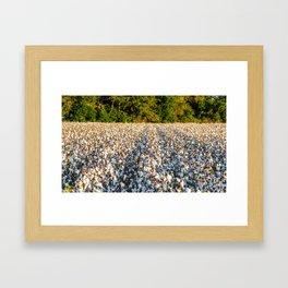Cotton Field 17 Framed Art Print