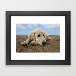 GOLDEN RETRIEVER on the beach Framed Art Print