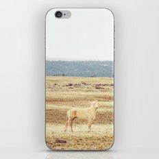 Two Oregon Horses iPhone & iPod Skin
