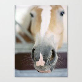 Day at the Stables Canvas Print