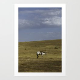 A Nomads Horse Art Print