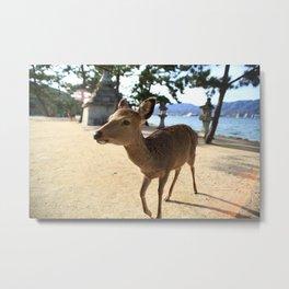 a deer in itsukushima Metal Print